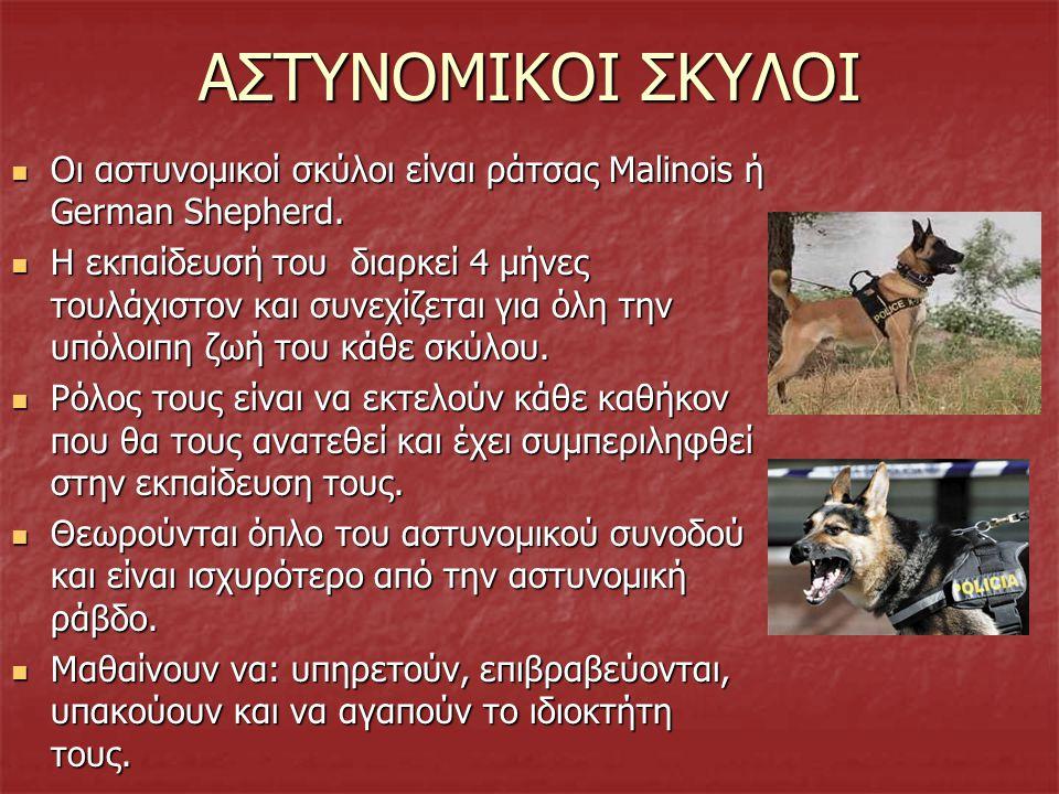 ΑΣΤΥΝΟΜΙΚΟΙ ΣΚΥΛΟΙ Οι αστυνομικοί σκύλοι είναι ράτσας Malinois ή German Shepherd.