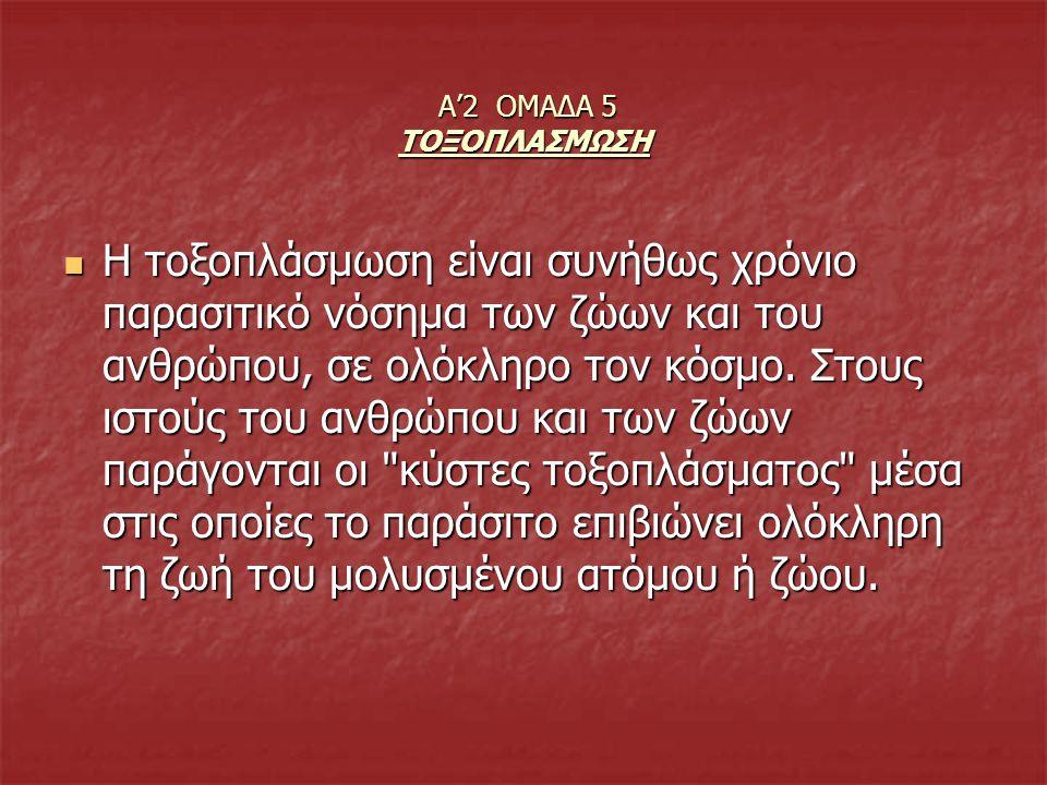 Α'2 ΟΜΑΔΑ 5 ΤΟΞΟΠΛΑΣΜΩΣΗ