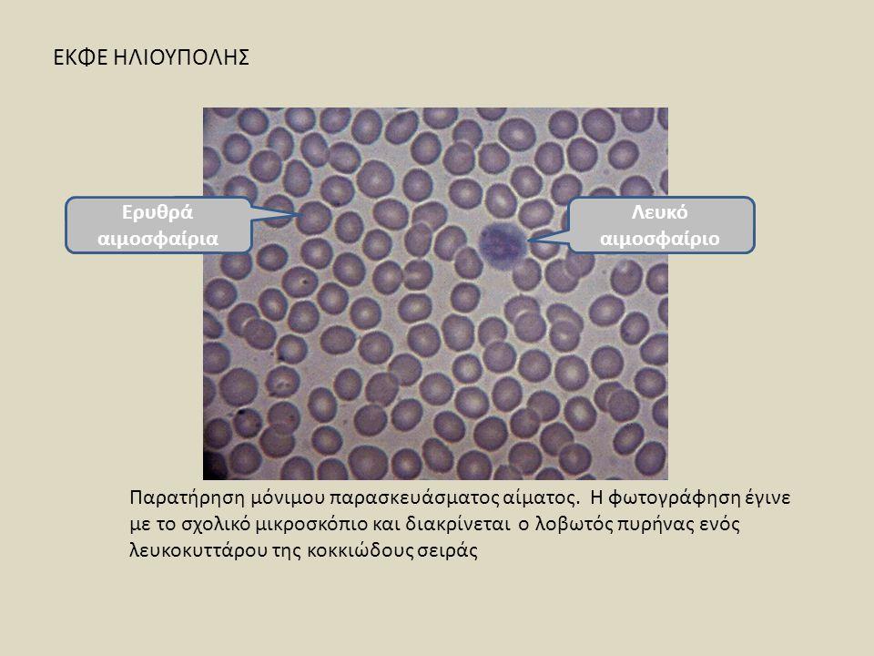 ΕΚΦΕ ΗΛΙΟΥΠΟΛΗΣ Ερυθρά αιμοσφαίρια Λευκό αιμοσφαίριο