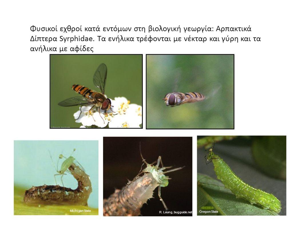 Φυσικοί εχθροί κατά εντόμων στη βιολογική γεωργία: Αρπακτικά