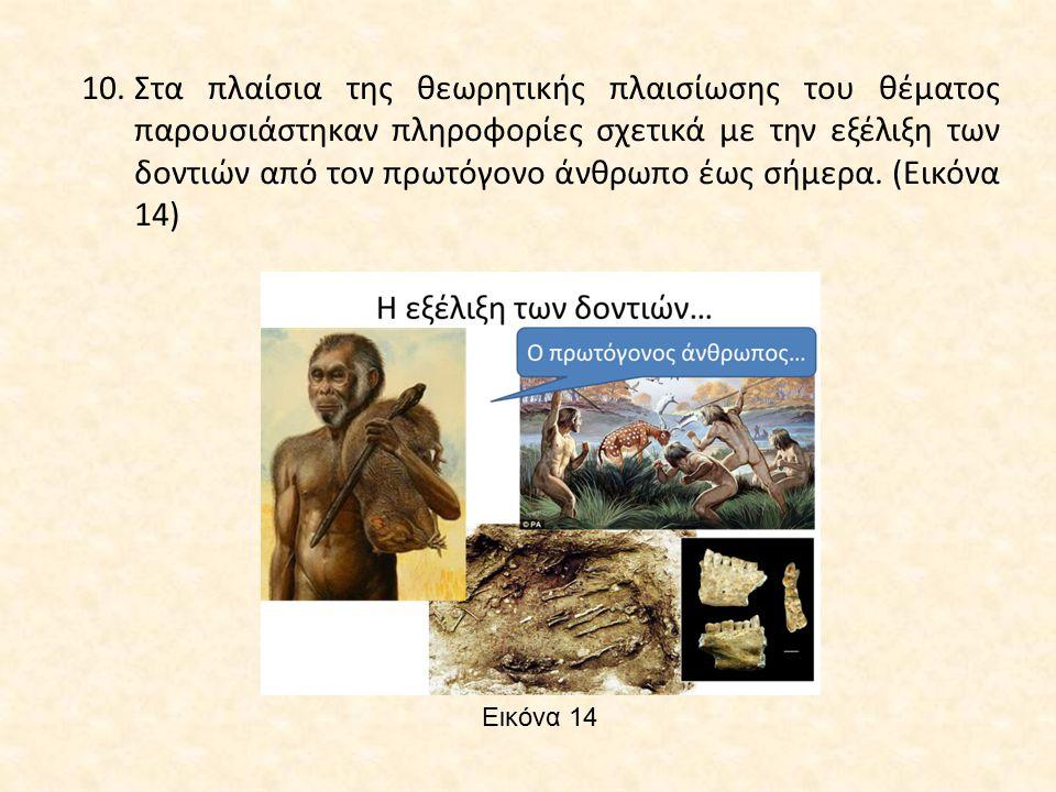 Στα πλαίσια της θεωρητικής πλαισίωσης του θέματος παρουσιάστηκαν πληροφορίες σχετικά με την εξέλιξη των δοντιών από τον πρωτόγονο άνθρωπο έως σήμερα. (Εικόνα 14)