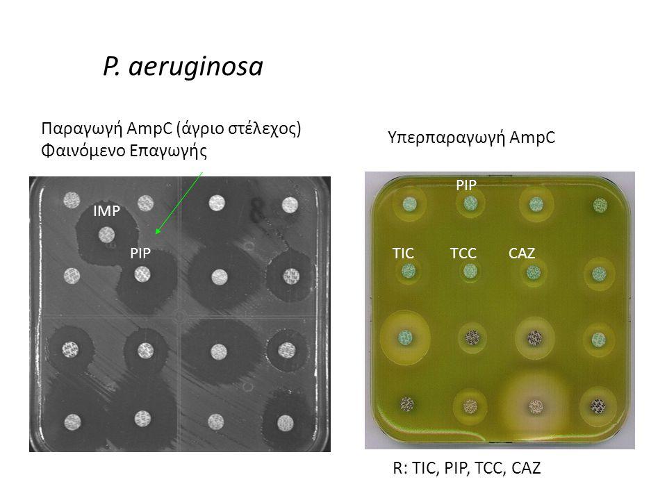 P. aeruginosa Παραγωγή AmpC (άγριο στέλεχος) Υπερπαραγωγή AmpC