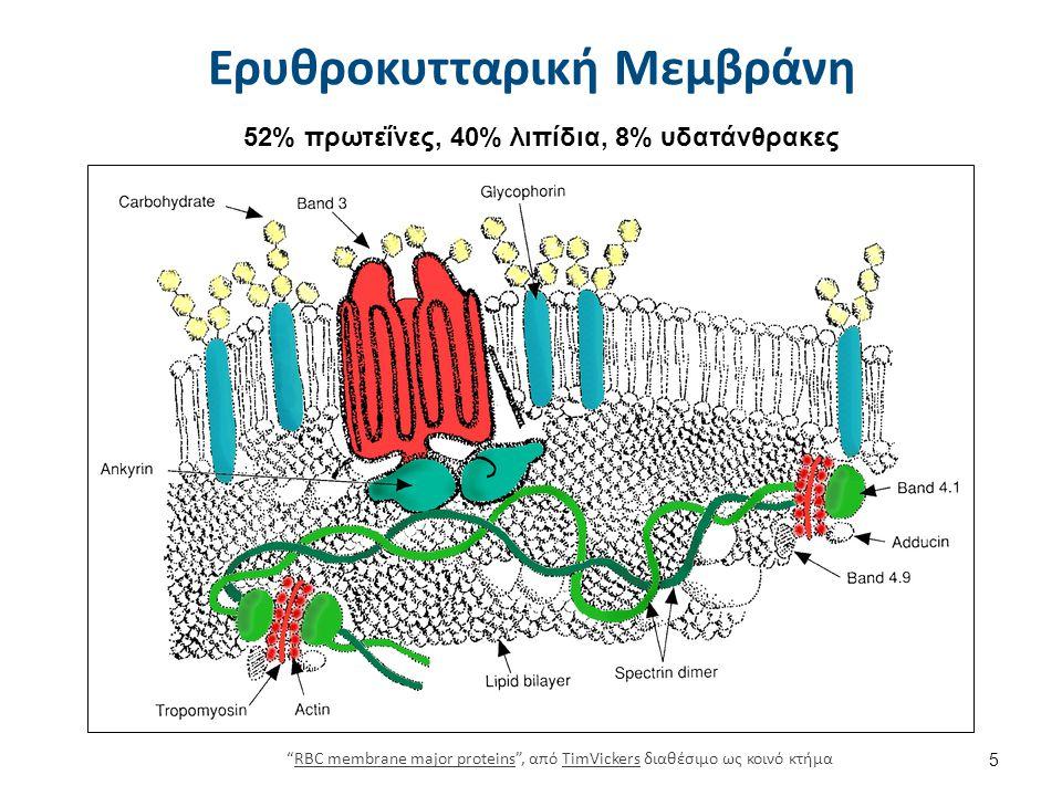 0317 Cytoskeletal Components , από CFCF διαθέσιμο με άδεια CC BY 3.0