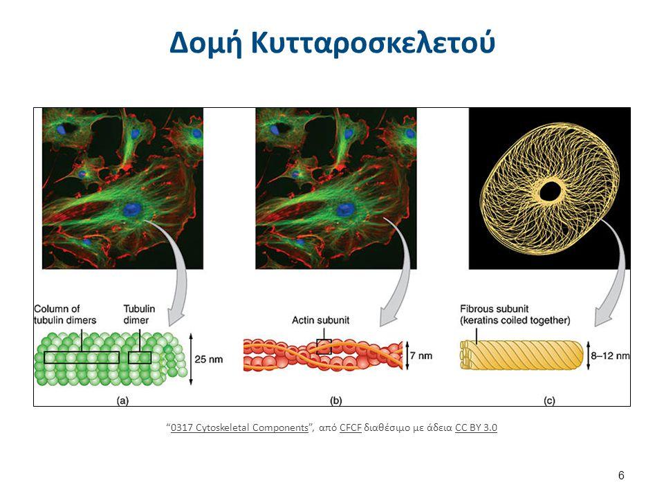 Μοριακή Βιολογία Διαταραχής
