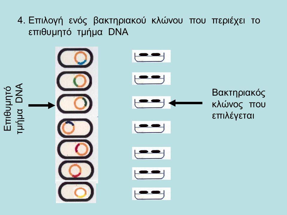 Επιλογή ενός βακτηριακού κλώνου που περιέχει το επιθυμητό τμήμα DNA