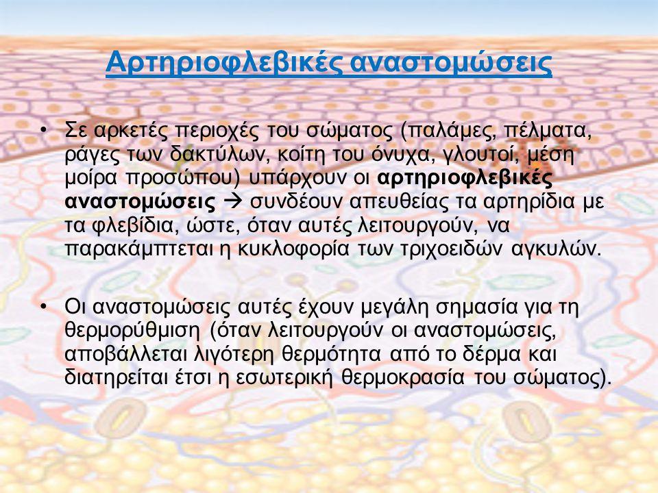 Αρτηριοφλεβικές αναστομώσεις