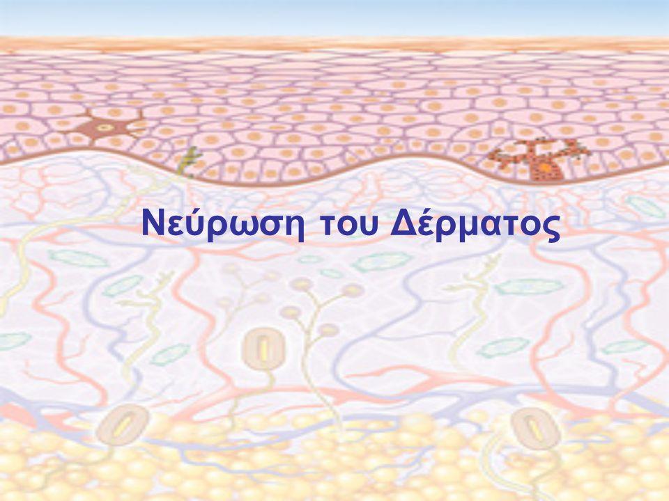 Νεύρωση του Δέρματος