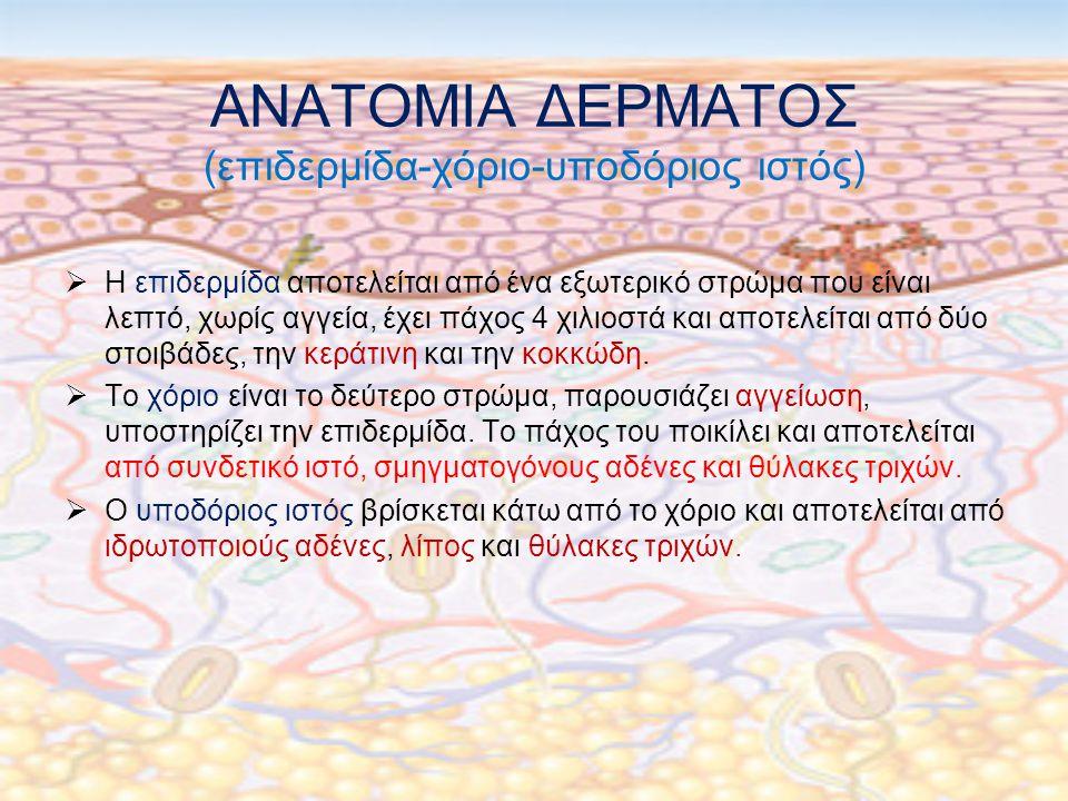 ΑΝΑΤΟΜΙΑ ΔΕΡΜΑΤΟΣ (επιδερμίδα-χόριο-υποδόριος ιστός)