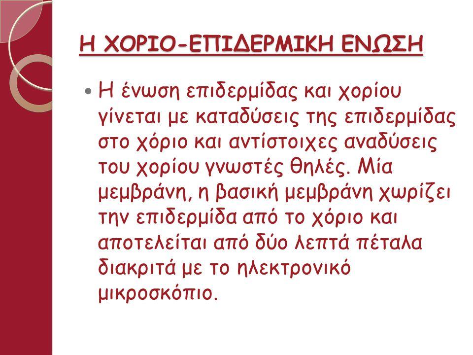 Η ΧΟΡΙΟ-ΕΠΙΔΕΡΜΙΚΗ ΕΝΩΣΗ