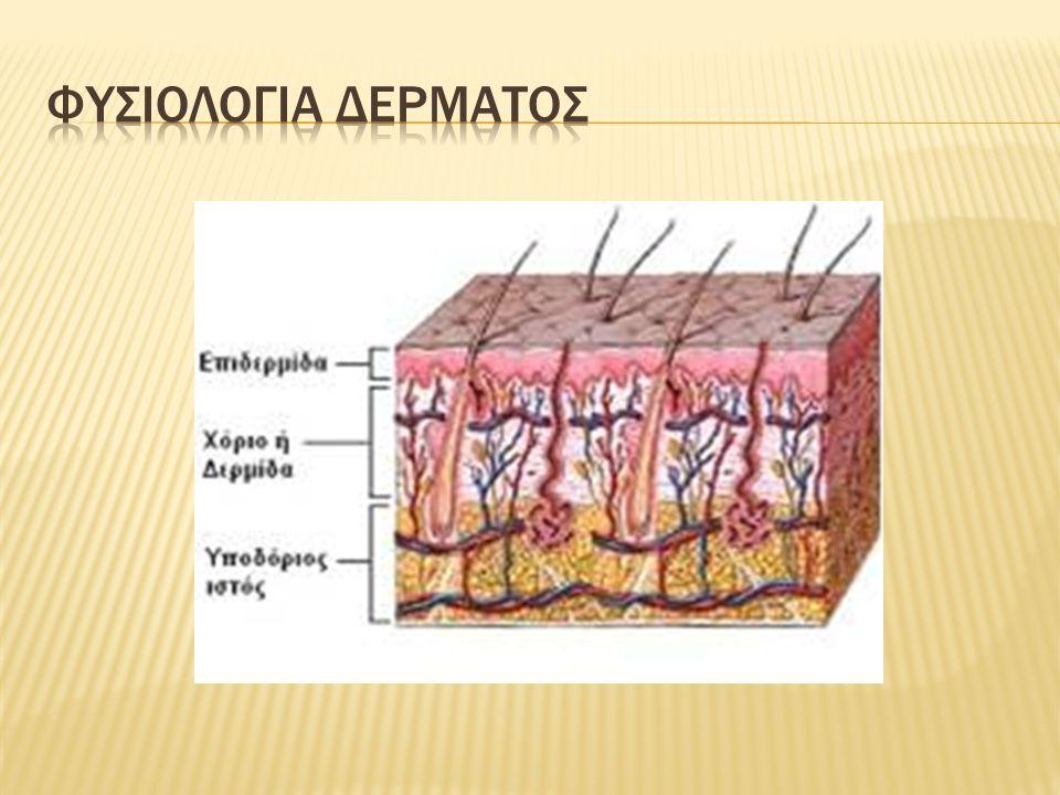 Φυσιολογια δερματοσ
