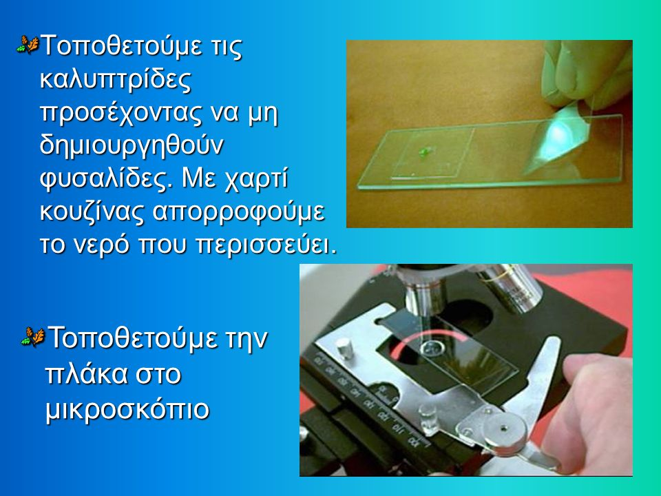 Τοποθετούμε την πλάκα στο μικροσκόπιο