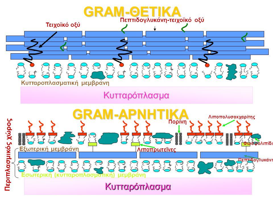 GRAM-ΘΕΤΙΚΑ GRAM-ΑΡΝΗΤΙΚΑ