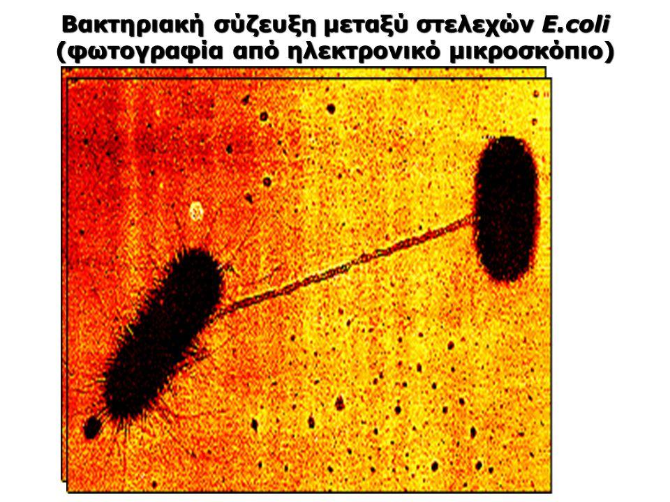 Βακτηριακή σύζευξη μεταξύ στελεχών E
