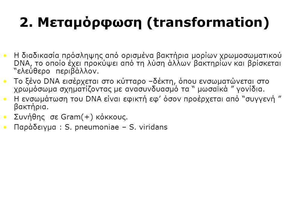 2. Μεταμόρφωση (transformation)