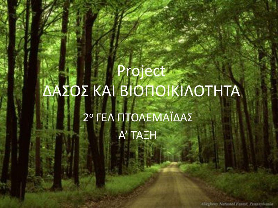 Project ΔΑΣΟΣ ΚΑΙ ΒΙΟΠΟΙΚΙΛΟΤΗΤΑ