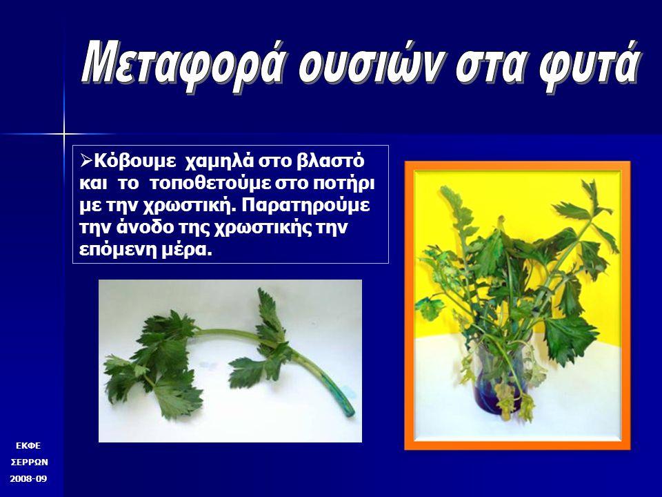 Μεταφορά ουσιών στα φυτά