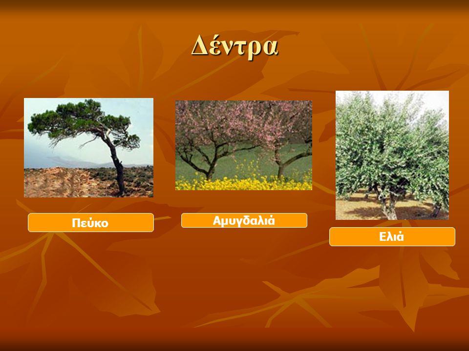 Δέντρα Ελιά Πεύκο Αμυγδαλιά