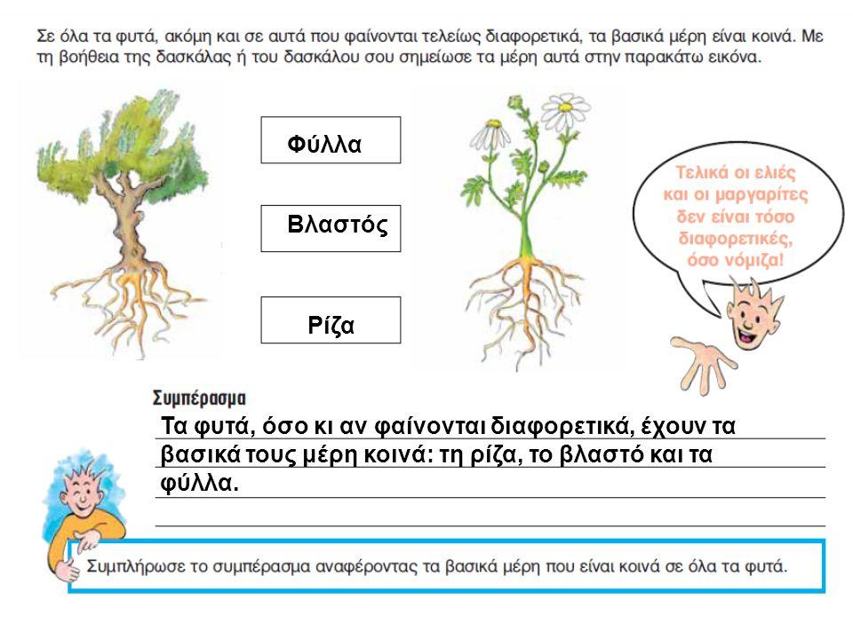 Φύλλα Βλαστός. Ρίζα. Τα φυτά, όσο κι αν φαίνονται διαφορετικά, έχουν τα. βασικά τους μέρη κοινά: τη ρίζα, το βλαστό και τα.
