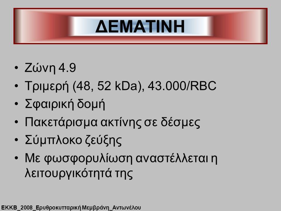 ΔΕΜΑΤΙΝΗ Zώνη 4.9 Τριμερή (48, 52 kDa), 43.000/RBC Σφαιρική δομή