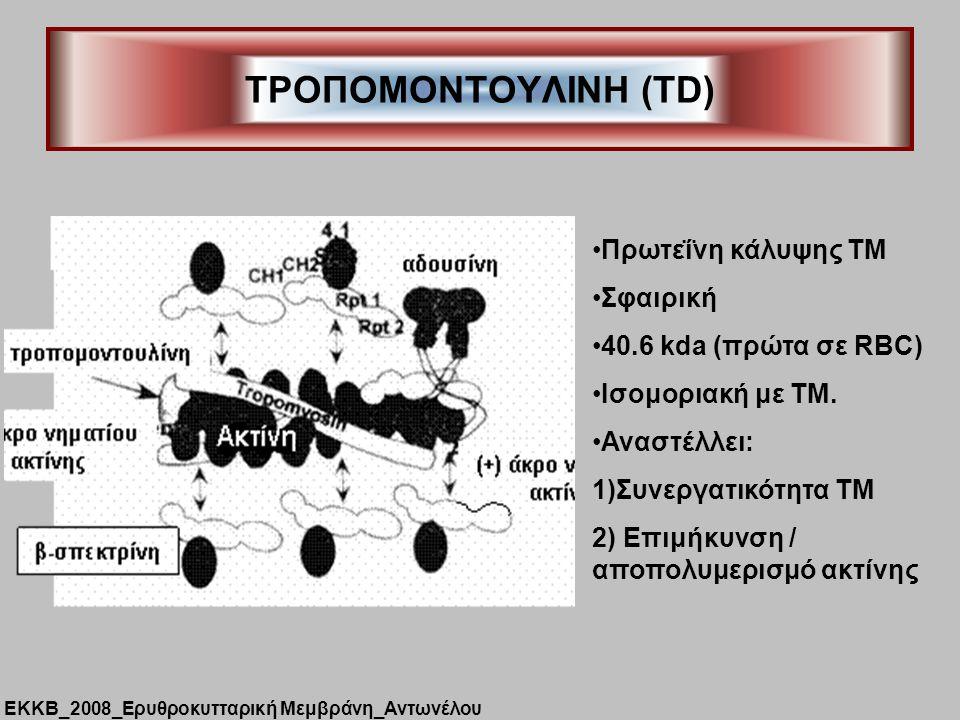 ΤΡΟΠΟΜΟΝΤΟΥΛΙΝΗ (TD) Πρωτεΐνη κάλυψης ΤΜ Σφαιρική