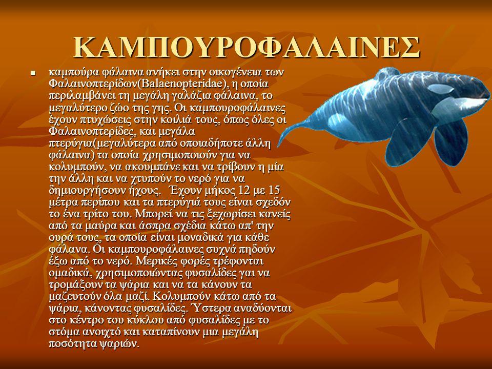 ΚΑΜΠΟΥΡΟΦΑΛΑΙΝΕΣ