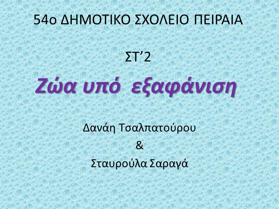 54ο ΔΗΜΟΤΙΚΟ ΣΧΟΛΕΙΟ ΠΕΙΡΑΙΑ ΣΤ'2