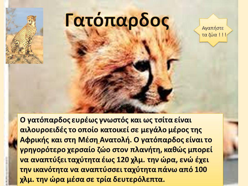 Γατόπαρδος Αγαπήστε τα ζώα ! ! !