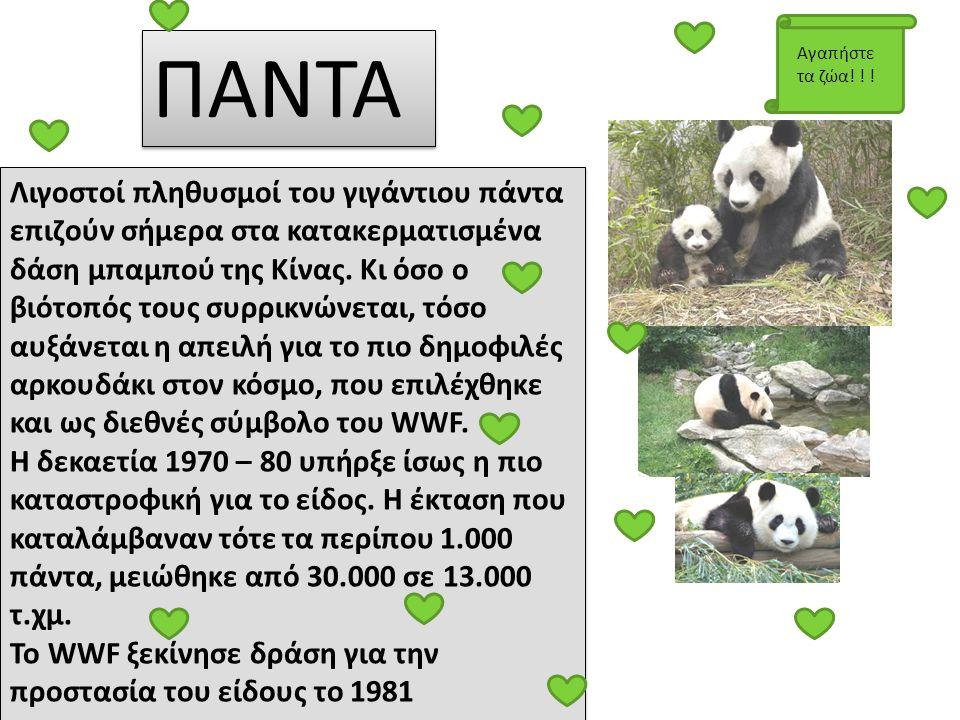 ΠΑΝΤΑ Αγαπήστε τα ζώα! ! !
