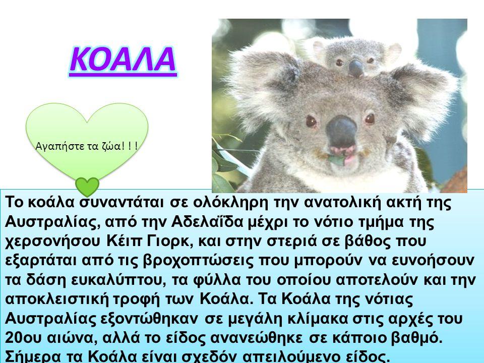ΚΟΑΛΑ Αγαπήστε τα ζώα! ! !