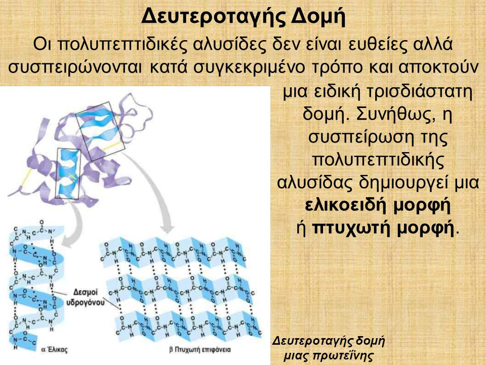 Δευτεροταγής δοµή µιας πρωτεΐνης