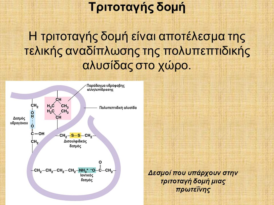 Δεσµοί που υπάρχουν στην τριτοταγή δοµή µιας πρωτεΐνης