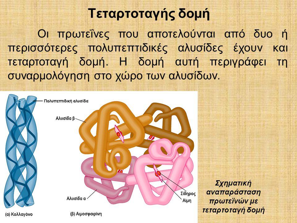 Σχηµατική αναπαράσταση πρωτεϊνών µε τεταρτοταγή δοµή