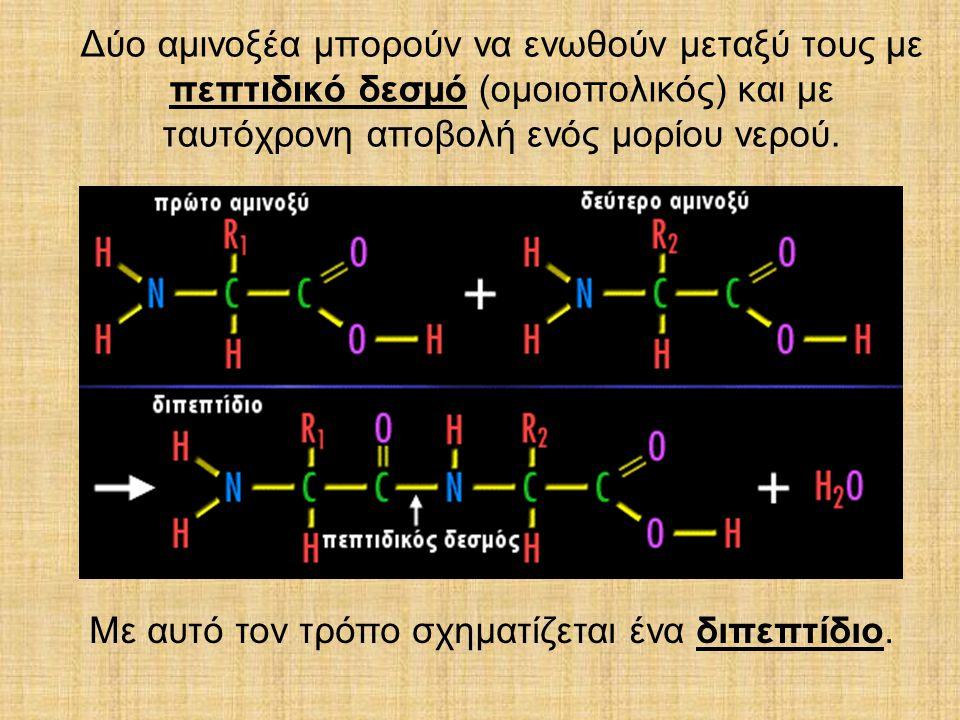 Δύο αµινοξέα µπορούν να ενωθούν µεταξύ τους µε πεπτιδικό δεσµό (οµοιοπολικός) και µε ταυτόχρονη αποβολή ενός µορίου νερού.