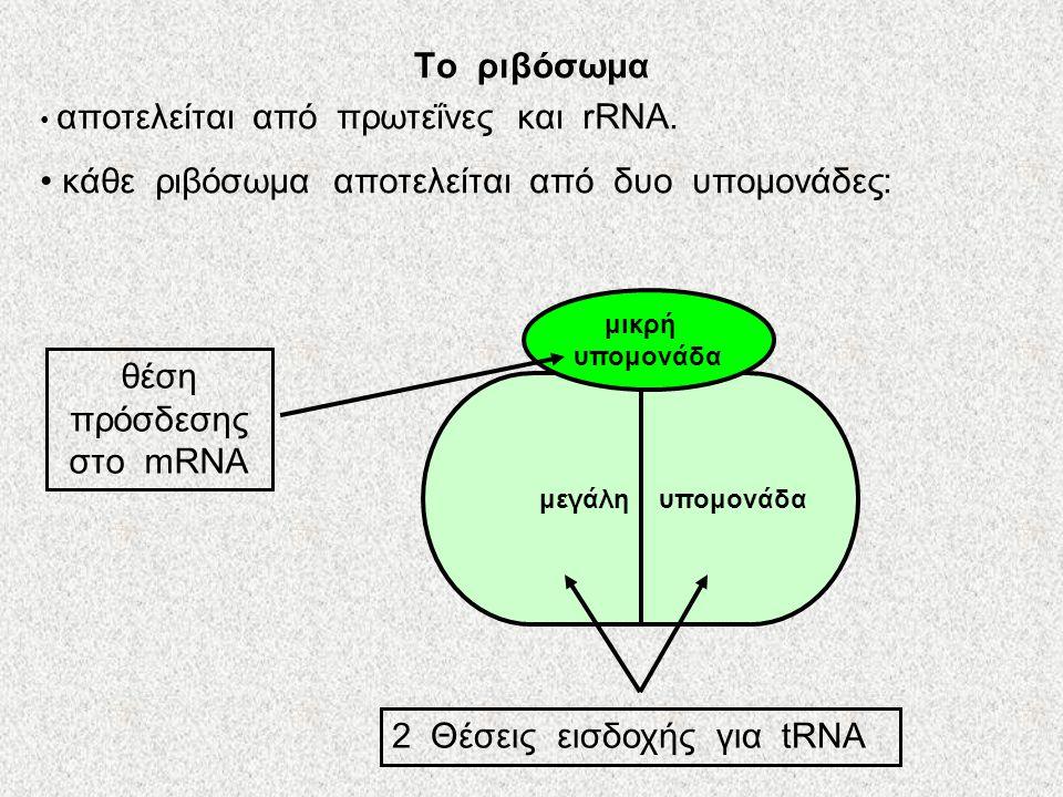 θέση πρόσδεσης στο mRNA