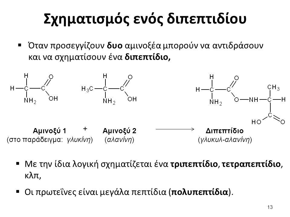 Η όξινη υδρόλυση των πρωτεϊνών (1 από 2)