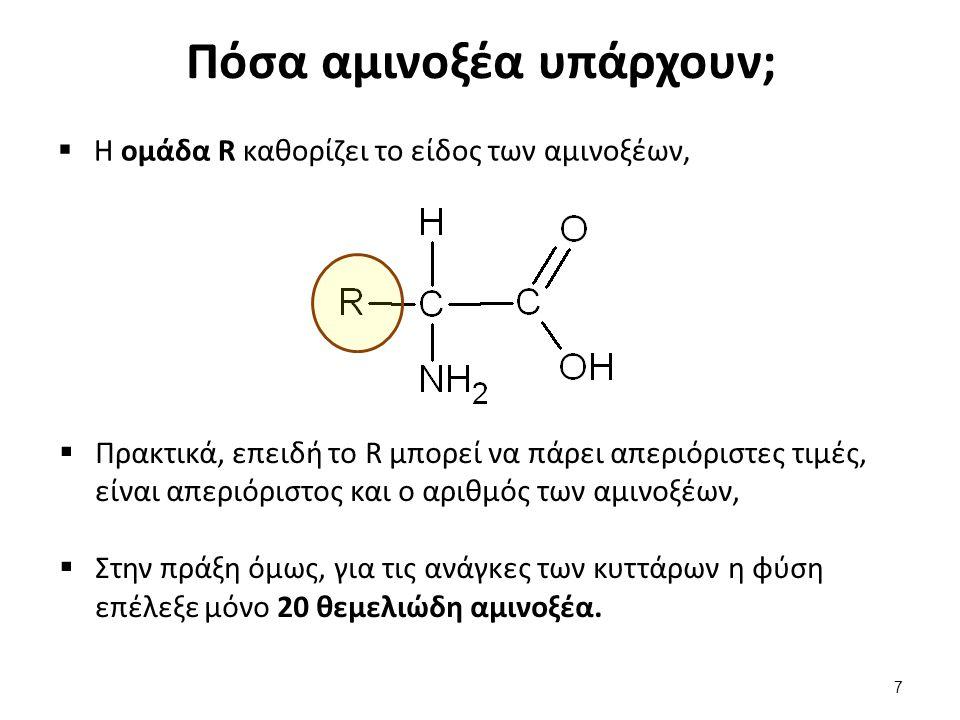 Παραδείγματα αμινοξέων