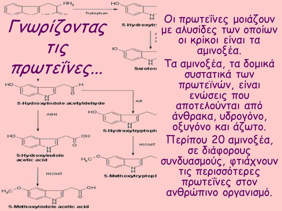 Γνωρίζοντας τις πρωτεΐνες...