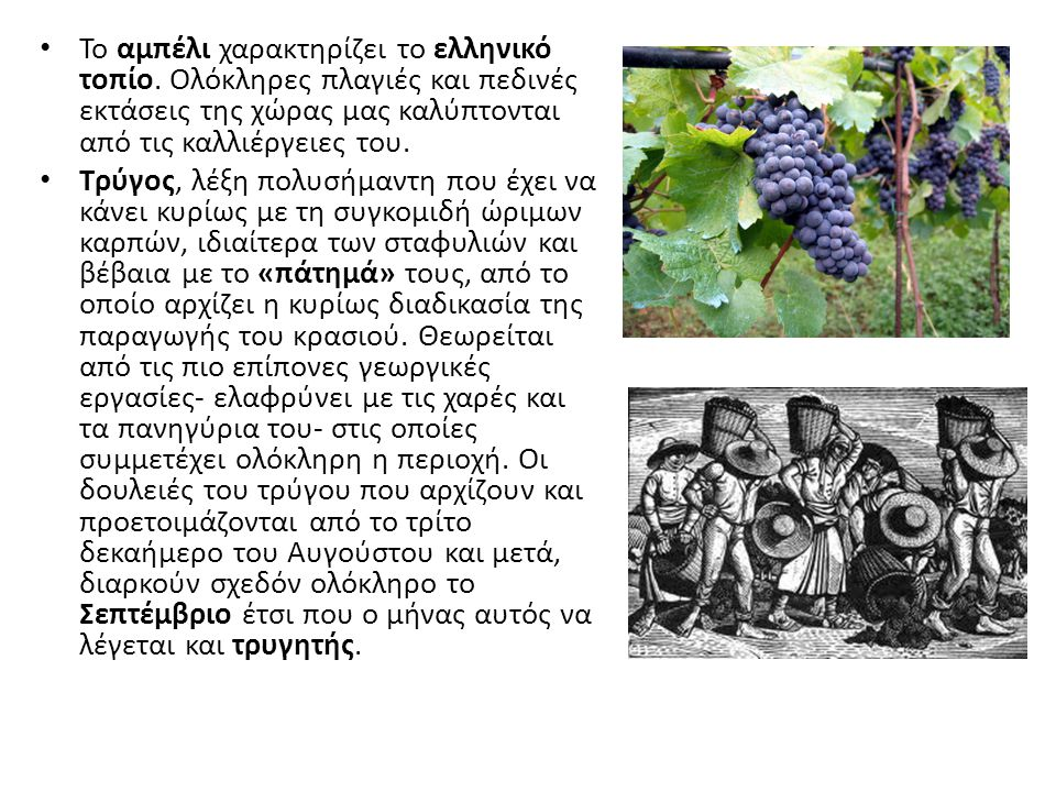 Το αμπέλι χαρακτηρίζει το ελληνικό τοπίο