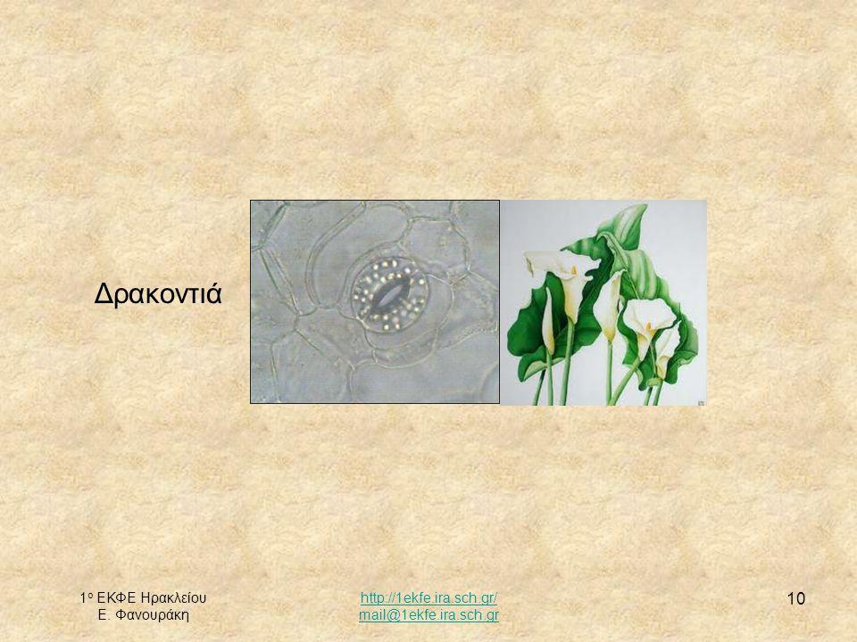Δρακοντιά 1ο ΕΚΦΕ Ηρακλείου Ε. Φανουράκη http://1ekfe.ira.sch.gr/