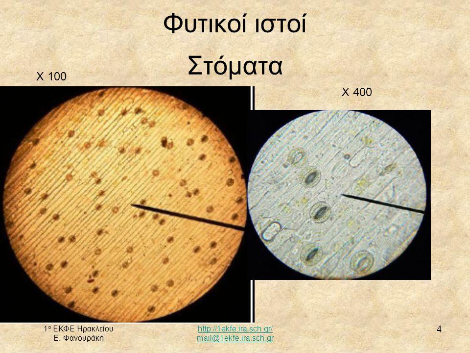 Φυτικοί ιστοί Στόματα X 100 X 400 1ο ΕΚΦΕ Ηρακλείου Ε. Φανουράκη
