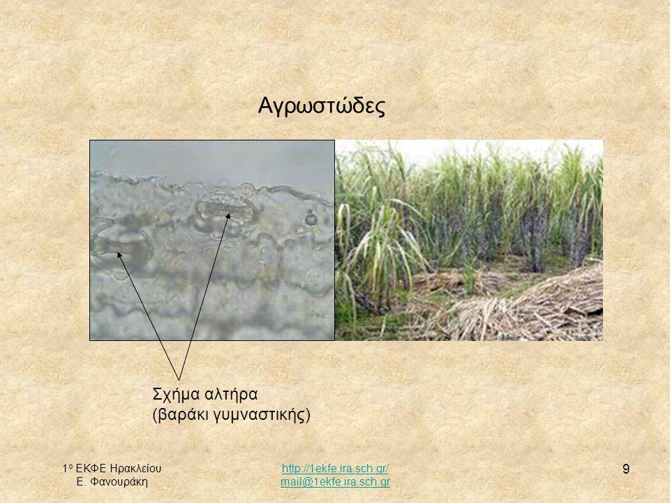 Αγρωστώδες Σχήμα αλτήρα (βαράκι γυμναστικής) 1ο ΕΚΦΕ Ηρακλείου