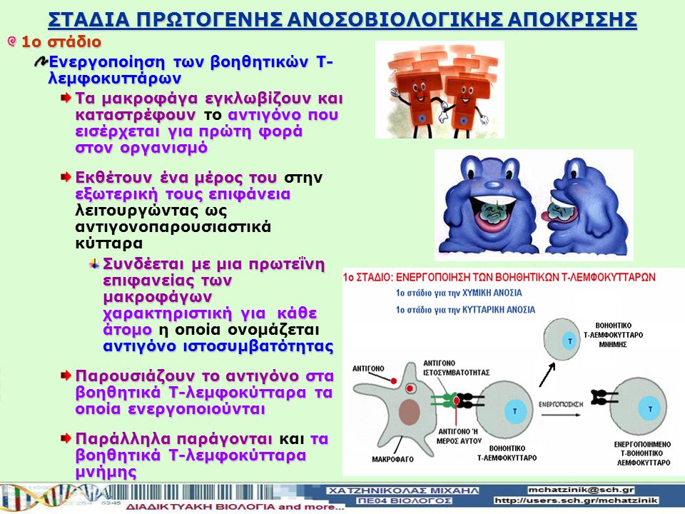ΣΤΑΔΙΑ ΠΡΩΤΟΓΕΝΗΣ ΑΝΟΣΟΒΙΟΛΟΓΙΚΗΣ ΑΠΟΚΡΙΣΗΣ