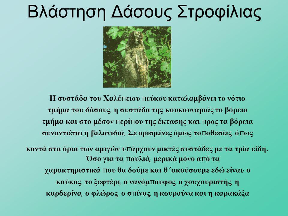 Βλάστηση Δάσους Στροφίλιας