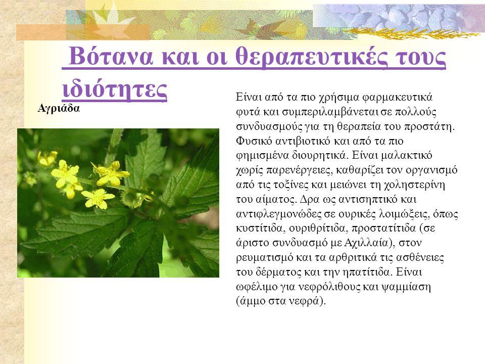 Βότανα και οι θεραπευτικές τους ιδιότητες