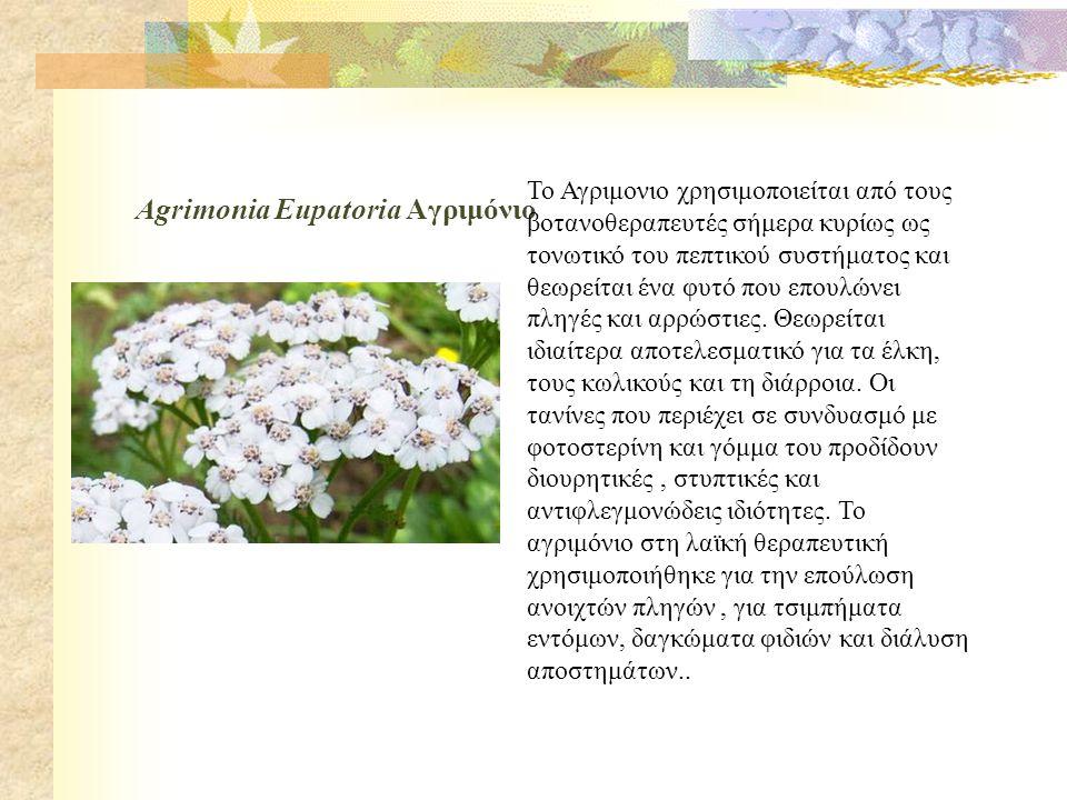 Agrimonia Eupatoria Αγριμόνιο
