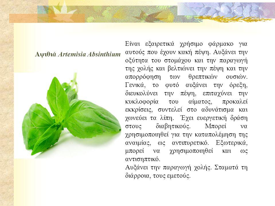 Αψιθιά Artemisia Absinthium