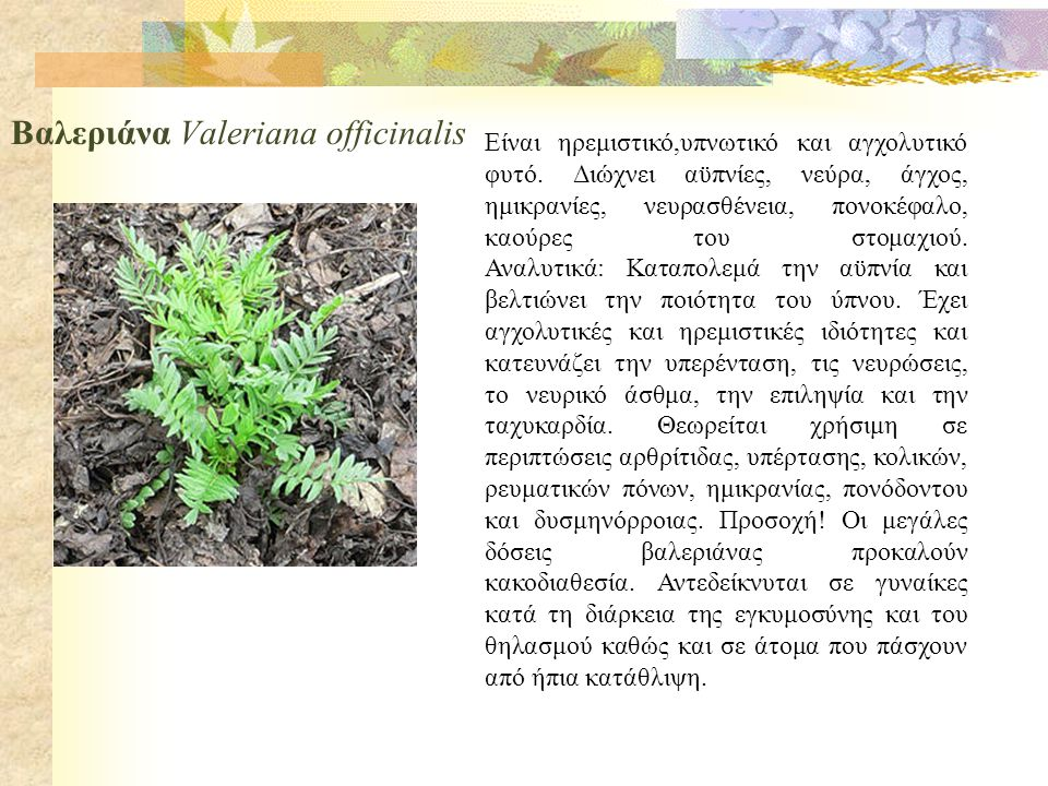 Βαλεριάνα Valeriana officinalis