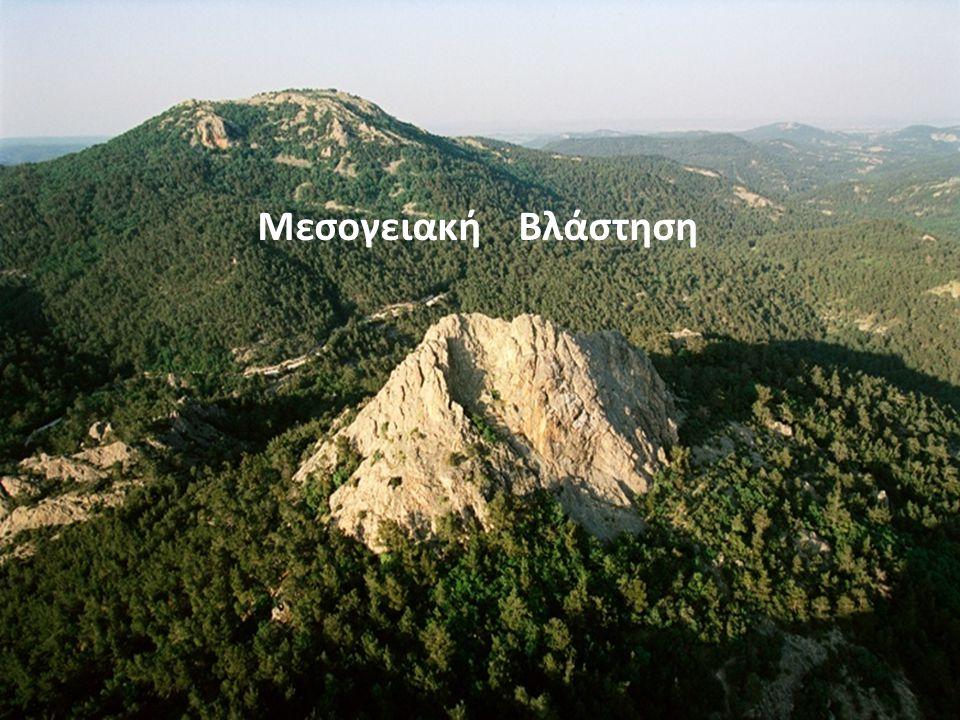 Μεσογειακή Βλάστηση