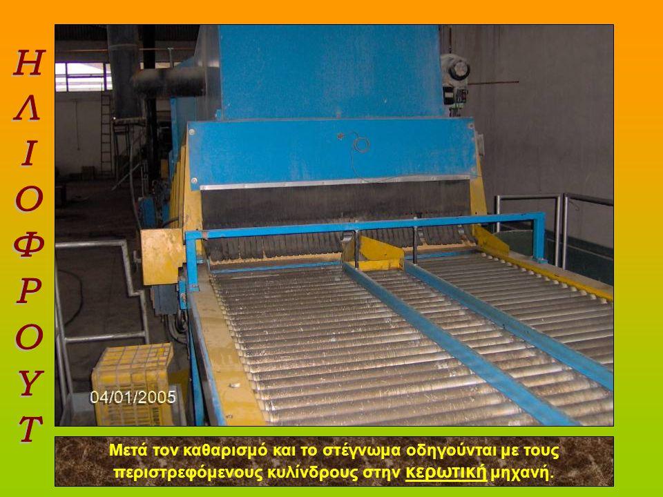 ΗΛΙΟΦΡΟΥΤ Μετά τον καθαρισμό και το στέγνωμα οδηγούνται με τους περιστρεφόμενους κυλίνδρους στην κερωτική μηχανή.