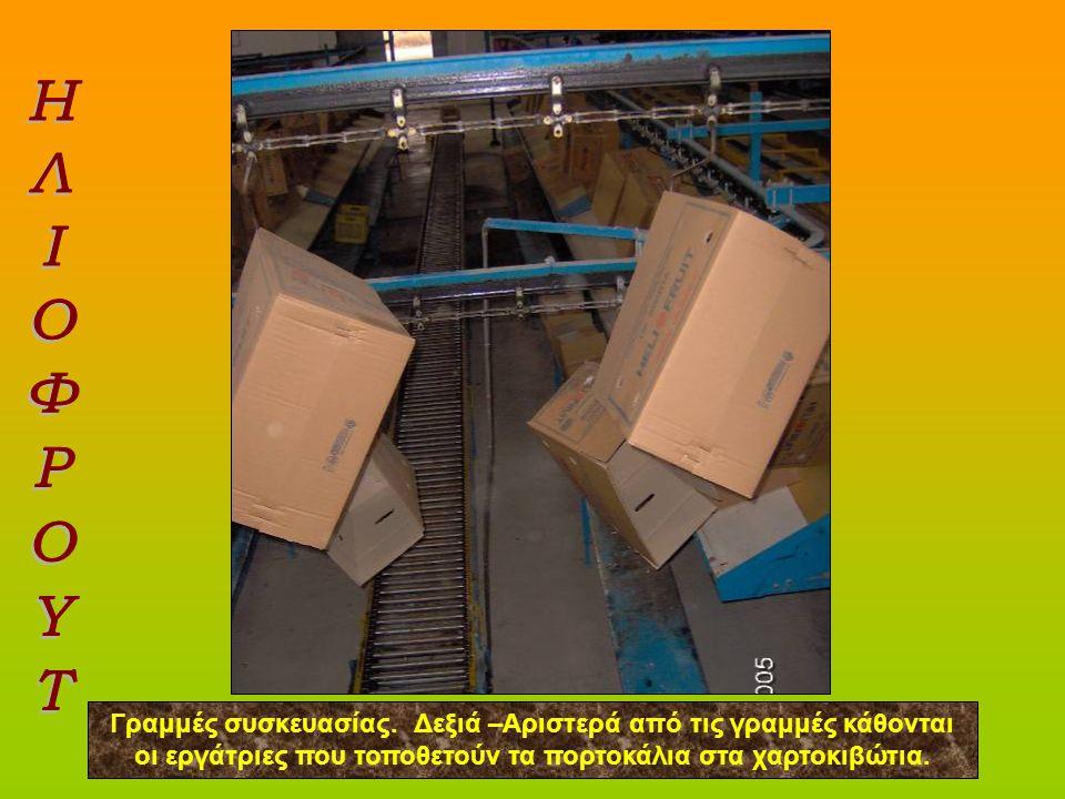 ΗΛΙΟΦΡΟΥΤ Γραμμές συσκευασίας. Δεξιά –Αριστερά από τις γραμμές κάθονται οι εργάτριες που τοποθετούν τα πορτοκάλια στα χαρτοκιβώτια.